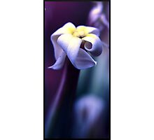 Twisted Petals Photographic Print