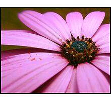 Electric Magenta Photographic Print