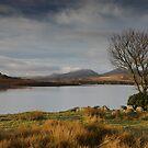 Trawsfynydd lake by Rory Trappe
