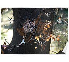 The Magic Oak Tree. Poster
