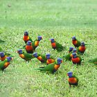 Rainbow Lorikeets  by Suzy  Baines