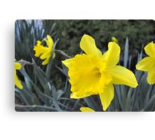 Ahhhhh... Spring...  (Hershey, PA) Canvas Print