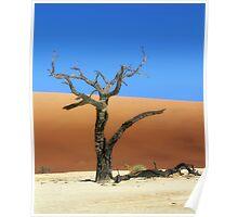 Died tree in sand desert Poster
