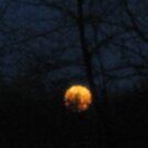 Rising moon  by Jeannie Matthews