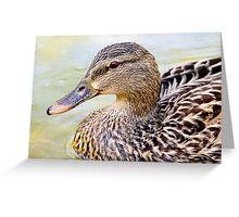 Female Mallard - Close up Greeting Card