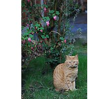 Cat in the garden under a tree Photographic Print