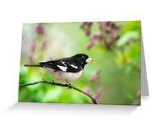Spring Songbird Greeting Card