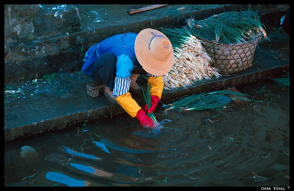 Washing Onions by ofer2000