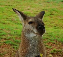 Wallaby by Of Land & Ocean - Samantha Goode