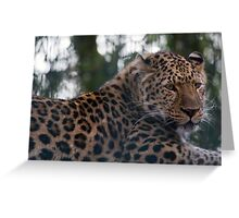 Amur leppard Greeting Card