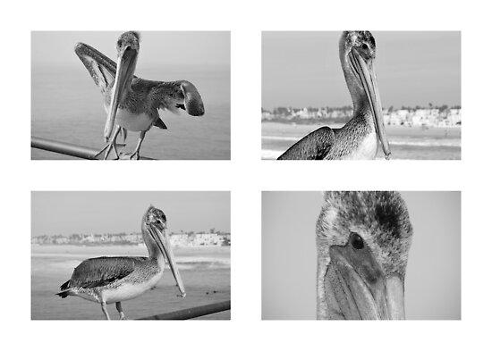 """Pelican IV by Lenora """"Slinky"""" Regan"""