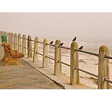 Birds gazing at the Sea Photographic Print
