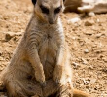 Sad Meerkat Sticker