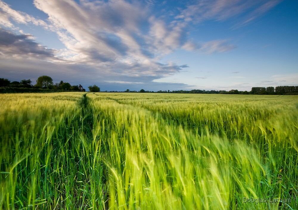 The Wind That Shakes the Barley by Douglas  Latham