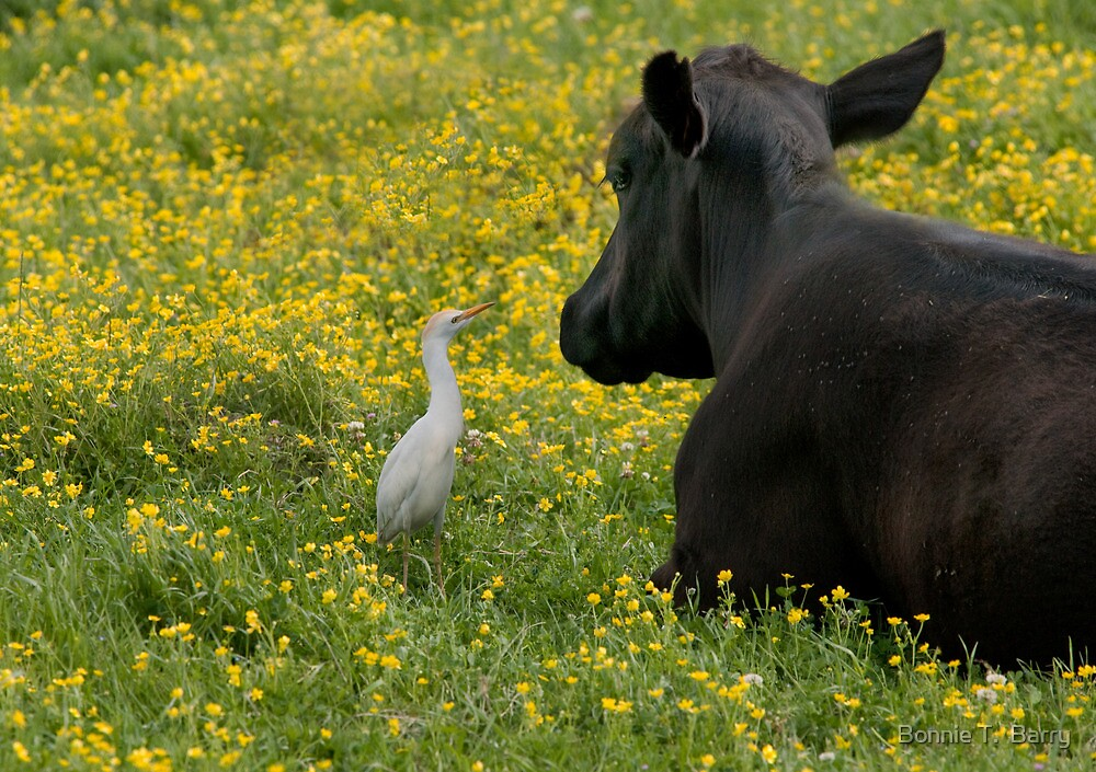 Said the egret to the cow . . . by Bonnie T.  Barry