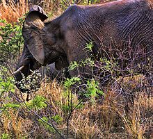 """I Hear You -Pilanesburg National Game Reserve""  by Bruce Jones"