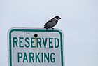 Reserved Parking by barnsis