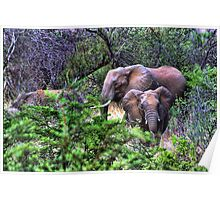"""I'm Coming- Pilanesburg National Game Reserve"" Poster"