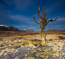 The Lone Tree - Glencoe by Douglas  Latham