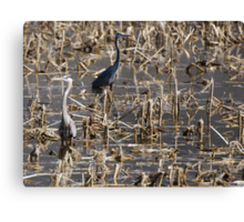 Some benefit from floods.  Canvas Print