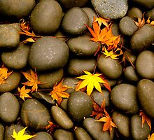 Japanese Gardens in the Fall by kimmer19