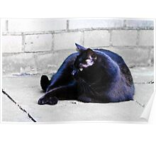 Blue Cat Poster