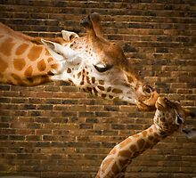 A Mothers Love by geoff curtis