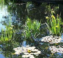 Reflections in a Japanese Water Garden by B.L. Thorvilson