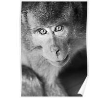 Bokeh monkey in black & white Poster