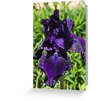 Purple Bearded Lady Greeting Card