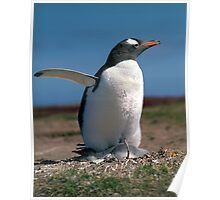 Penguin with chick Poster