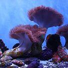 Under the Sea II. California Academy of Sciences Aquarium. San Francisco 2010 by Igor Pozdnyakov