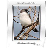 ''White-breasted Woodswallow'' Poster
