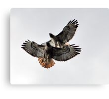 Playing Leap Hawk Canvas Print