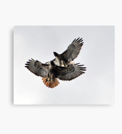 Playing Leap Hawk Metal Print