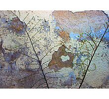 a wall is peeling Photographic Print