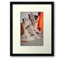 Hello you... Framed Print
