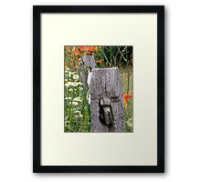 Tiger lilies on rail fence Framed Print