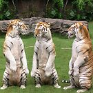 Three Tigers by Kharizma