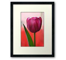 Easter Tulip Framed Print
