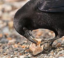 World's Most Intelligent Bird Shows Her Stuff by David Friederich