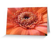 Orange Beauty (Super Macro) Greeting Card