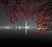 Light painting Cherry Blossoms by Josh Myers
