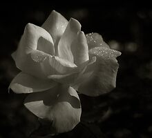 Dew of the Rose by Michael Mars