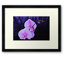 Lilac Beauty Framed Print