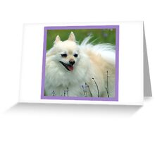 Foxy Lady on a Grassy Knoll Greeting Card