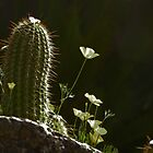 Arizona Beauties by gcampbell