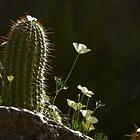 Arizona Beauties by gcampbell
