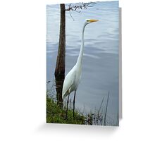 A White Heron Standing Tall Greeting Card