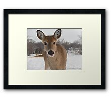 Friendly Young Doe in the Wilderness  Framed Print